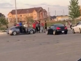 Brawl Breaks Out in Brampton