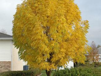 Summer drought in Saskatoon stressing trees