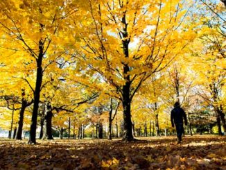 Canada Winter Forecast Calls For Mild Fall, Smooth Transition To Cold