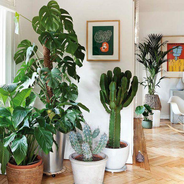 Indoor Plants Look Good And Bring Health Benefits Too