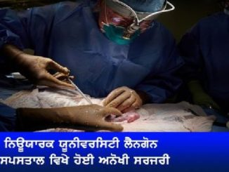 Surgeons test pig kidney